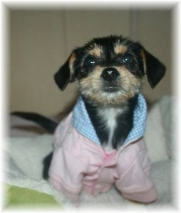 This sweet pup is available for adoption at Heavensown Rescue