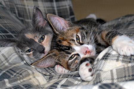 Illinois Valley Cat Taxi is a non-profit organization in Menota, IL