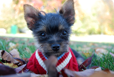 Holiday safety tips for your pets.