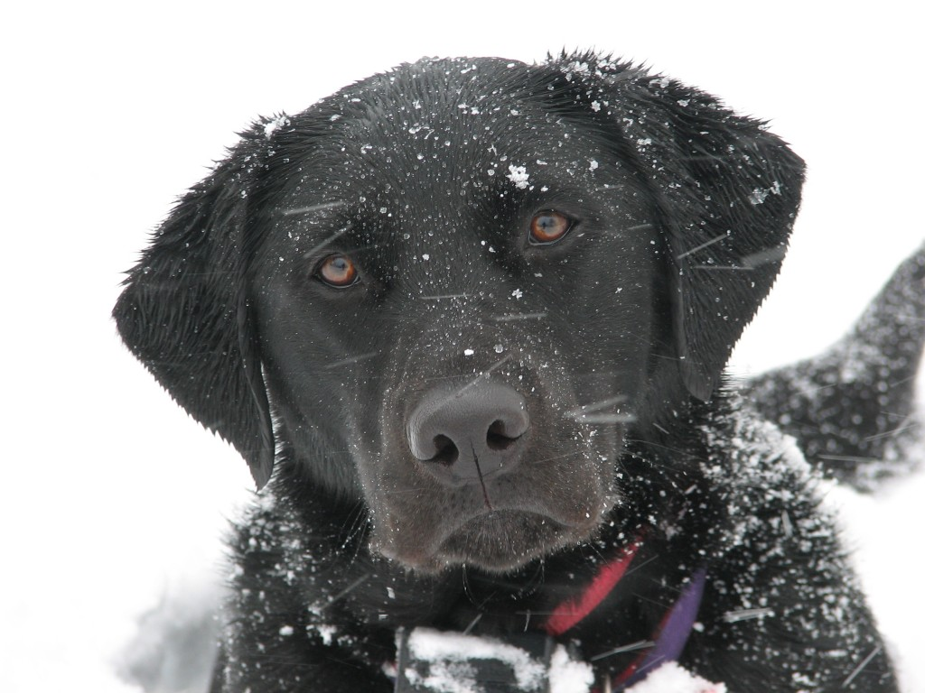 It is important to keep your dog safe during the cold winter months.