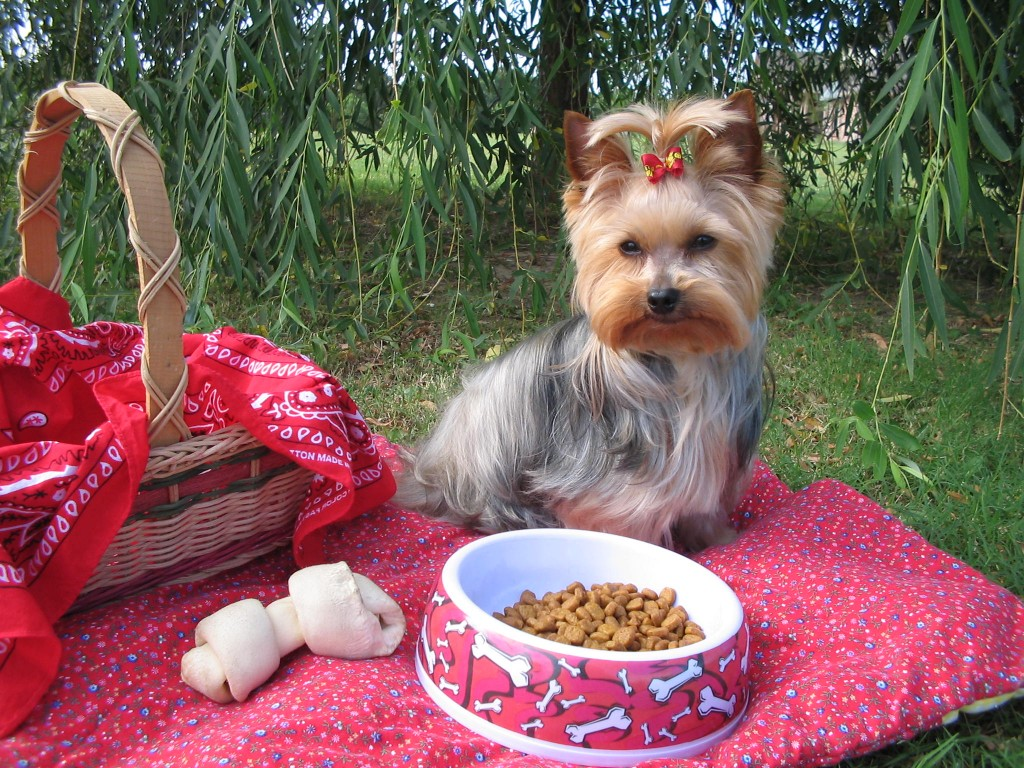Choosing a high quality pet food for your dog or cat is an important decision.