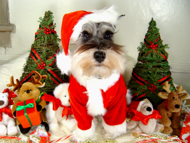 Most pet owners will be buying holiday gifts for their dog or cat this year.