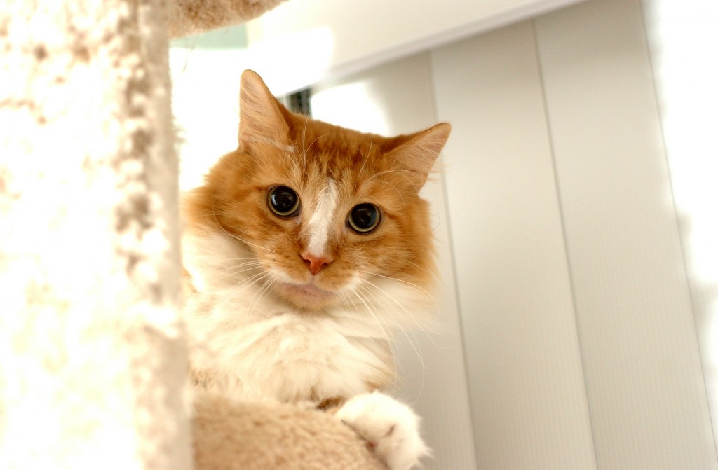 Simple, inexpensive toys can make playtime more fun for your cat.