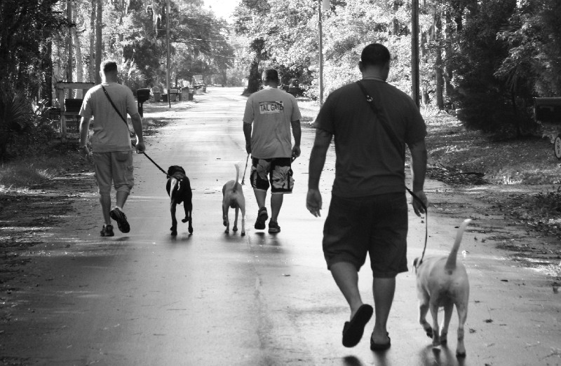 K9s for Warriors provides trained service dogs to wounded military veterans.