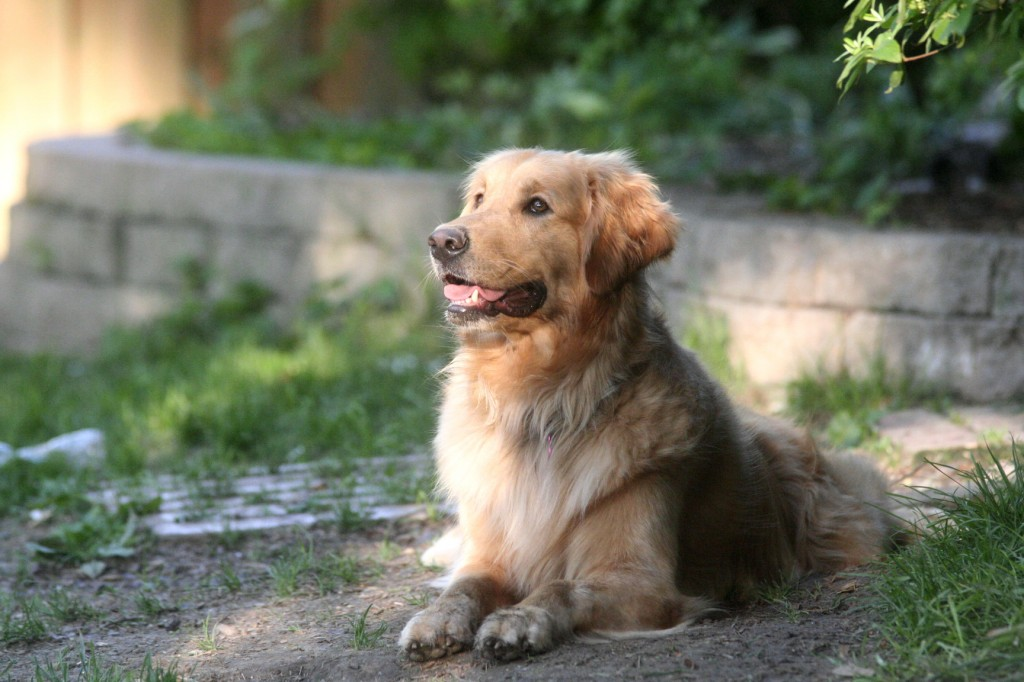 There are several steps you can take to keep your pet safe from encounters with wildlife.