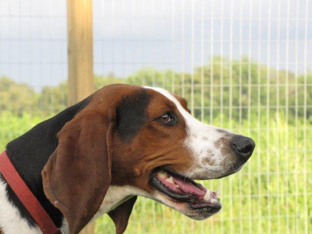 Lilly Sue is just one of many lovings dogs at Ruf Creek Ranch searching for a Forever home.