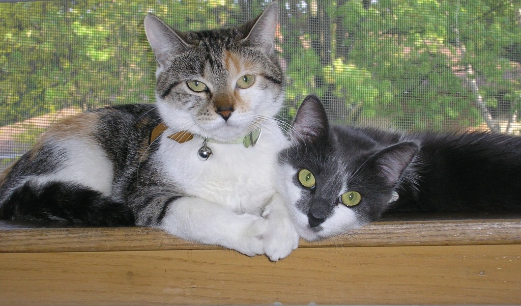 Learn the 10 warning signs to look for when selecting a boarding facility for your cat.