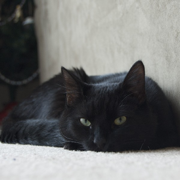 In some cultures, black cats are considered good luck!
