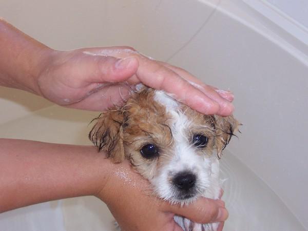 Use a gentle pet shampoo formulated for use on pets.