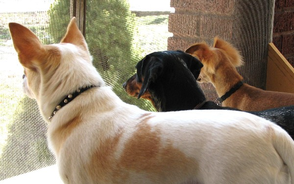 Your dog can have fun in Doggie Daycare and learn socialization skills.