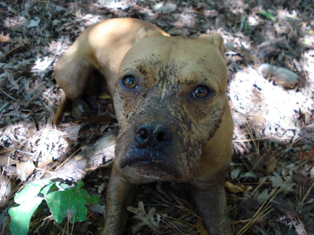 Make sure your dog has access to fresh water to reduce the risk he will drink from a mud puddle.
