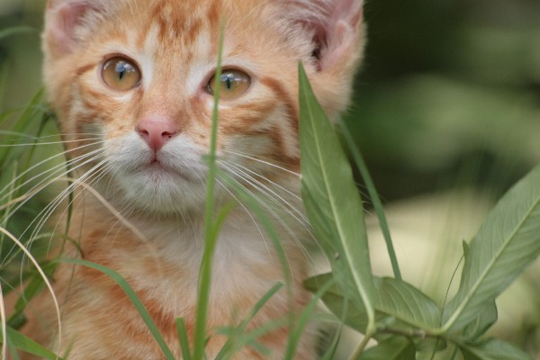 Many cats seem to enjoy eating grass.