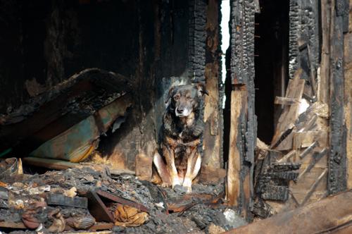 arson-dog