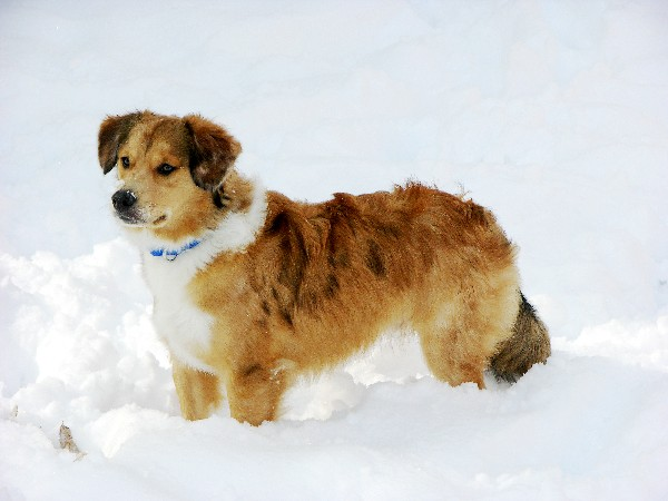 Dog boots can help protect your dog's paws from winter snow and summer heat.