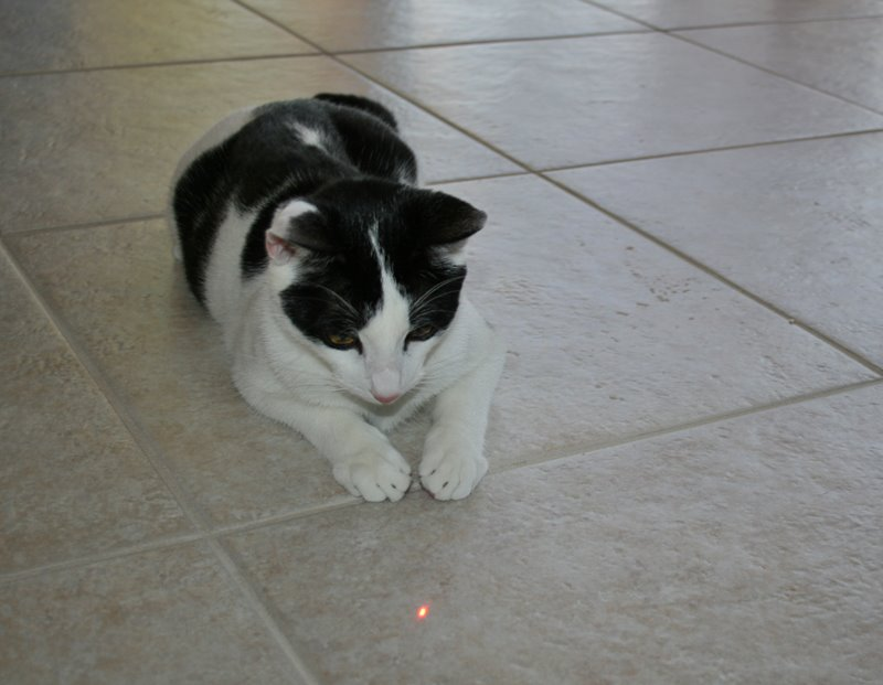 Most cats enjoy playing with laser toys.