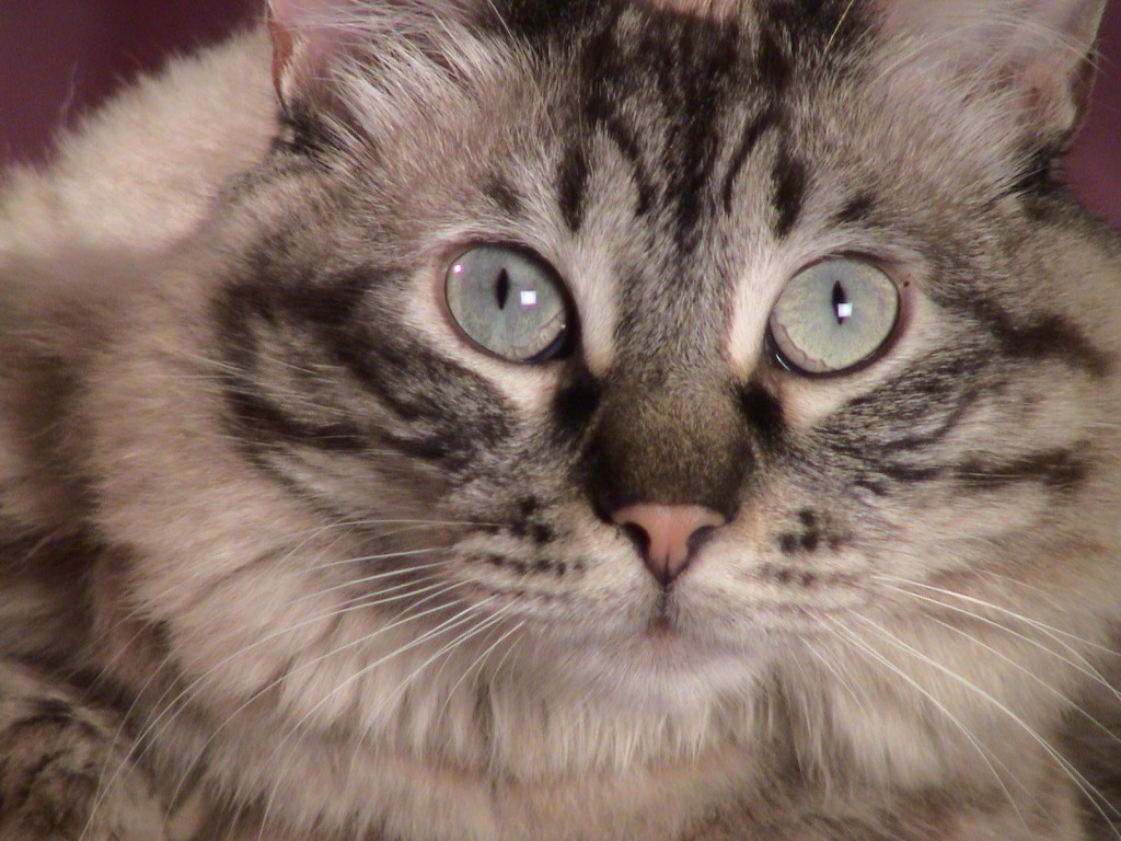 In the animal world, a direct stare can be a sign of aggression.