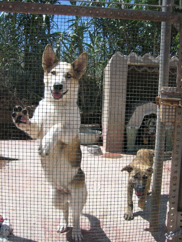 Sadly, about 20 percent of the pets surrendered to a shelter were originally adopted from a shelter.