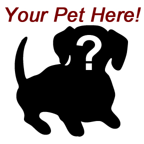 Your own rescue pet could be featured here