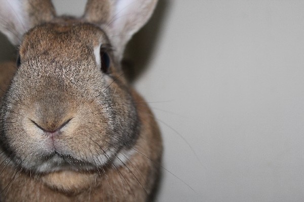 Don't make an impulse decision to buy a rabbit for Easter.