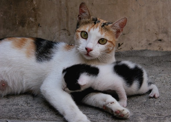 A mother cat transports her kittens by the skin at the back of the neck known as the scruff