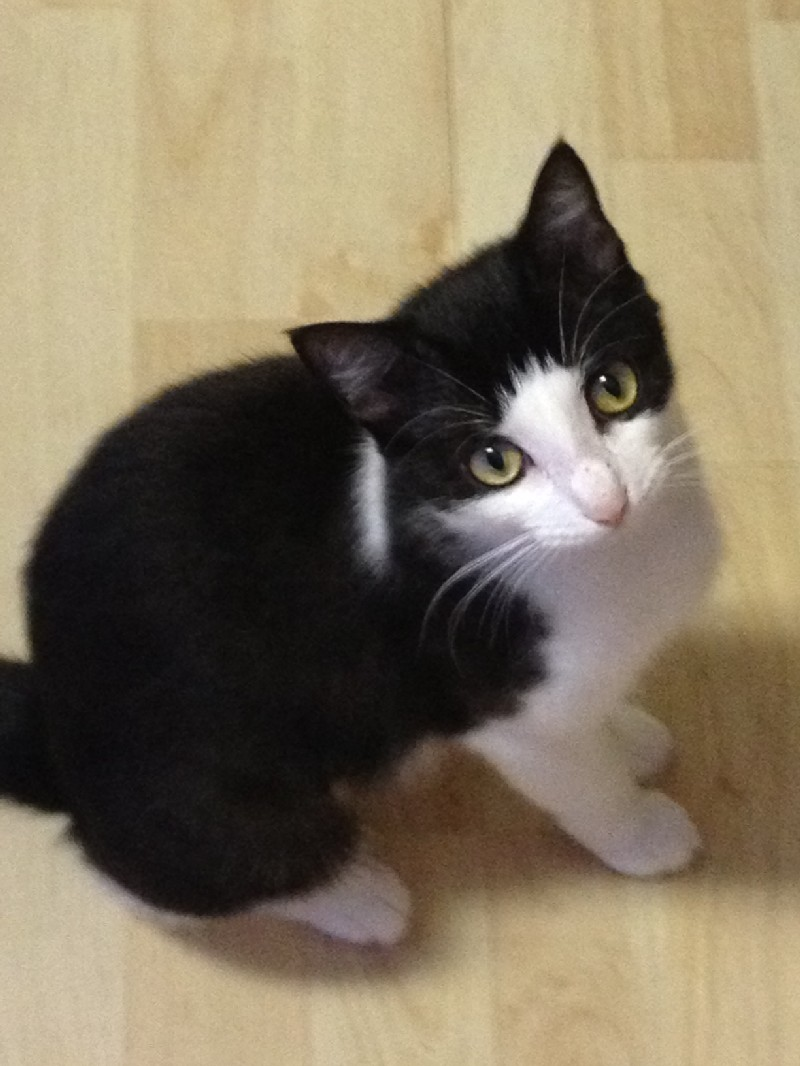Tippy was a kitten left alone in a field when she was rescued.
