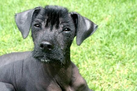 dogs native to mexico 1 800 petmeds cares