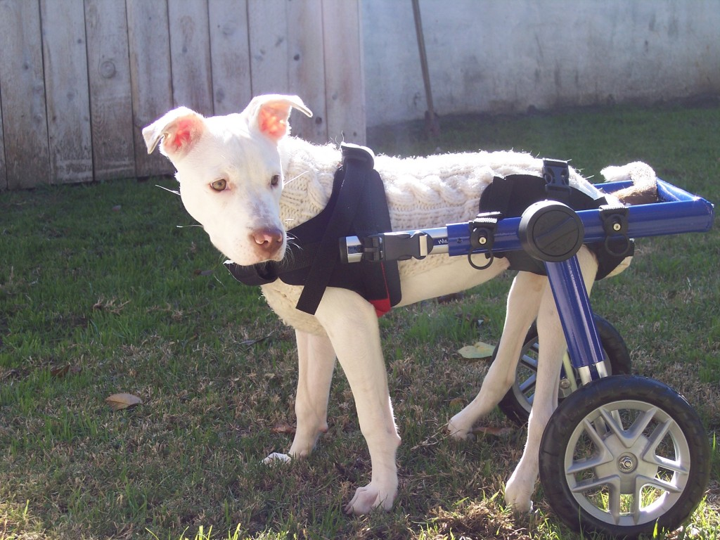 Most differently-abled pets have no idea they are different