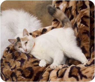 Caliente is spayed and current on her vaccinations