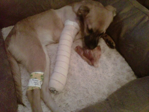 Martha broke her leg when she was only 7 months old