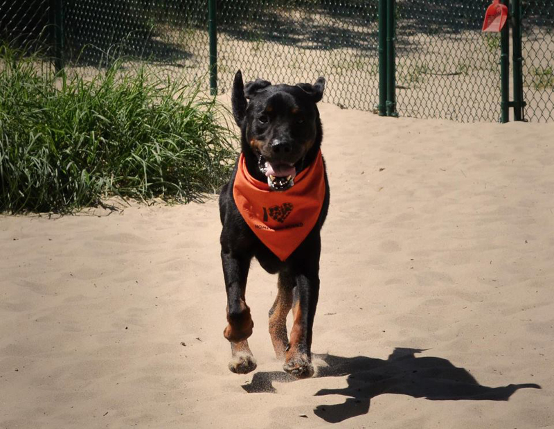 Allons-y was rescued from the Homeward Bound in Manistee, MI