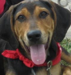 Dillon is a happy-go-lucky hound mix