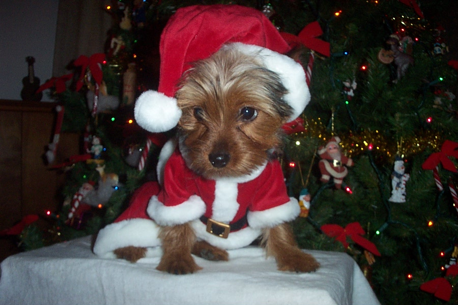 Be aware that some common holiday plants can be toxic to pets