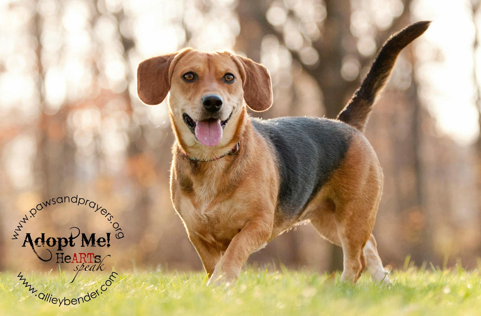 Adoptable Pet Spotlight: Meet Jenny | 1-800-PetMeds Cares™