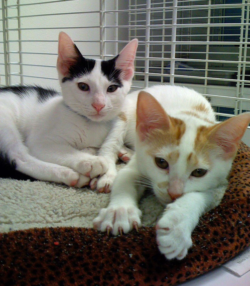 where can i adopt a cat near me pets world