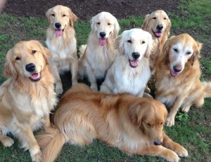 The Goodwill Assistance Dog Academy Canine Crew