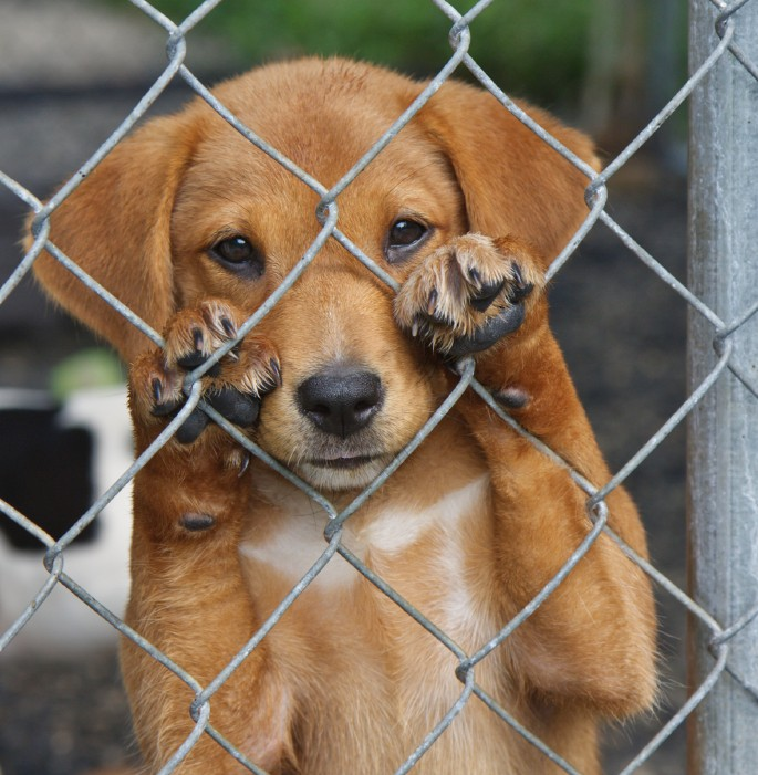 international homeless animals day be e part of the