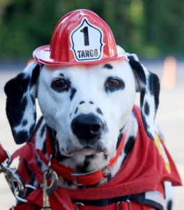 Fire Safety Dog, Tango