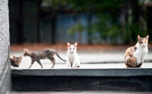 TNR programs help stabilize feral cat populations