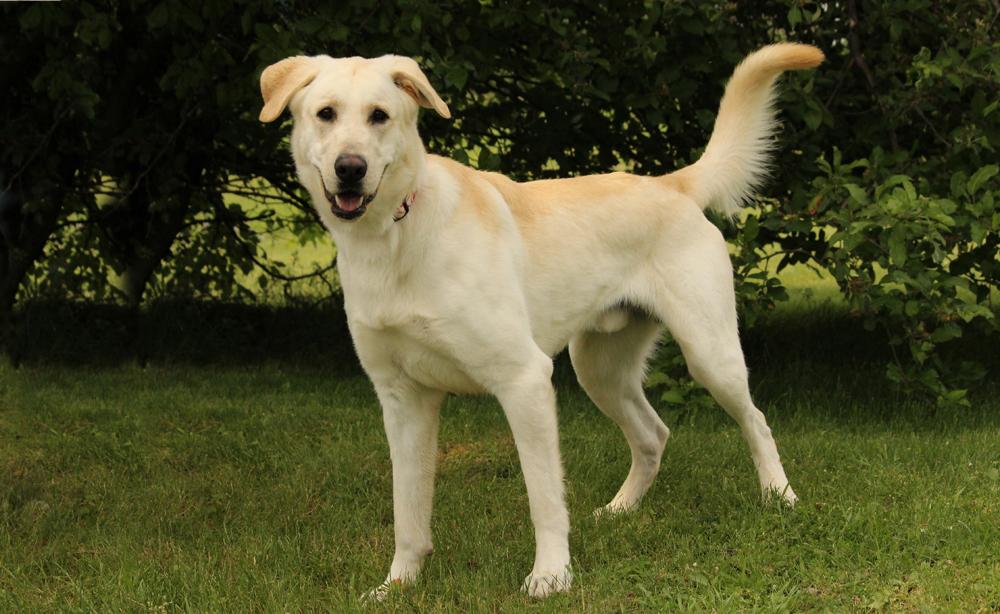Adoptable Pet Spotlight Meet Bert 1 800 Petmeds Cares