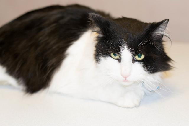 Adoptable pet spotlight: Meet Whiskers! | 1-800-PetMeds Cares™