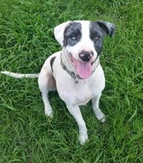 Harley needs a forever home!