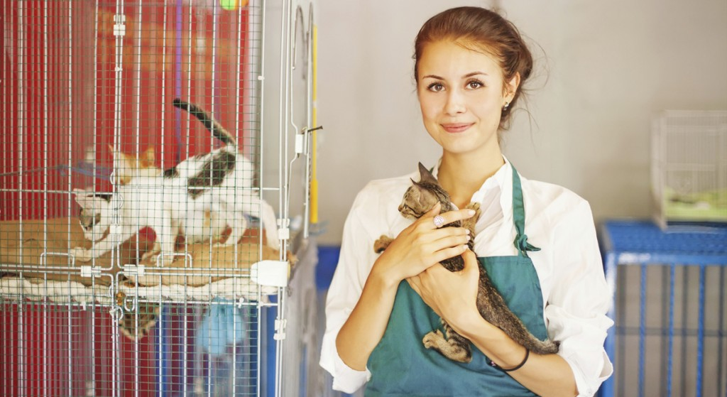 Help your local animal rescue