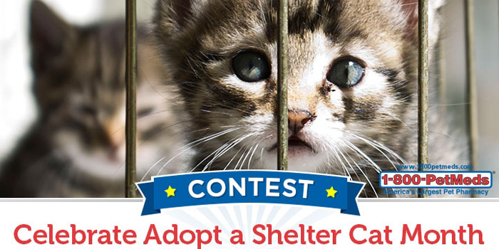 Celebrate Adopt a Shelter Cat Month
