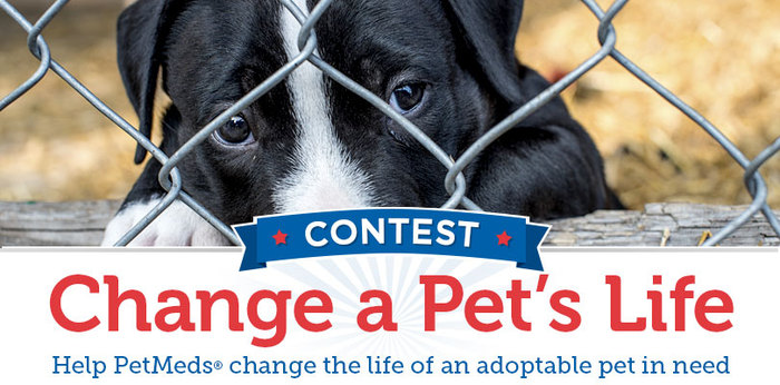 The PetMeds Change a Pet's Life Contest