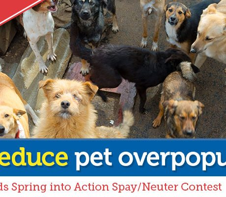 1-800-PetMeds Cares™ Spring into Action Spay/Neuter Contest