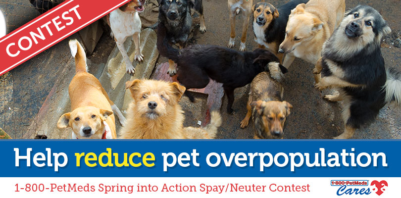 1-800-PetMeds Cares™ Spring into Action Spay/Neuter Contest