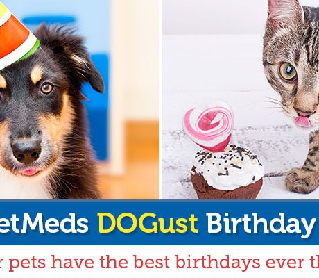 1-800-PetMeds Cares™ DOGust Birthday Contest