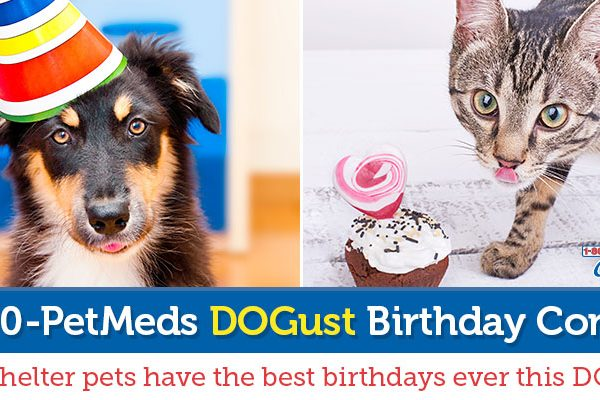 1-800-PetMeds Cares DOGust Birthday Contest
