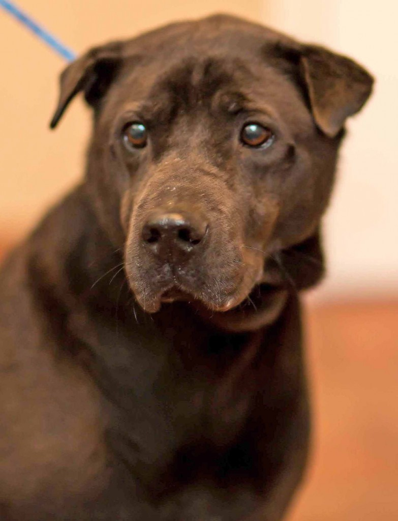 Quinn is looking for a home in Atlanta.
