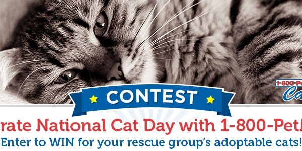 PetMeds Cares National Cat Day Contest